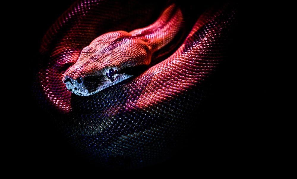 Snake Plissken and the Progressive Vision of America